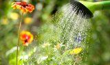 Vande blomster i haven i varmen
