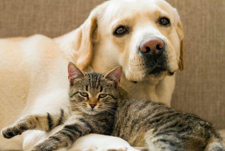 hund og kat